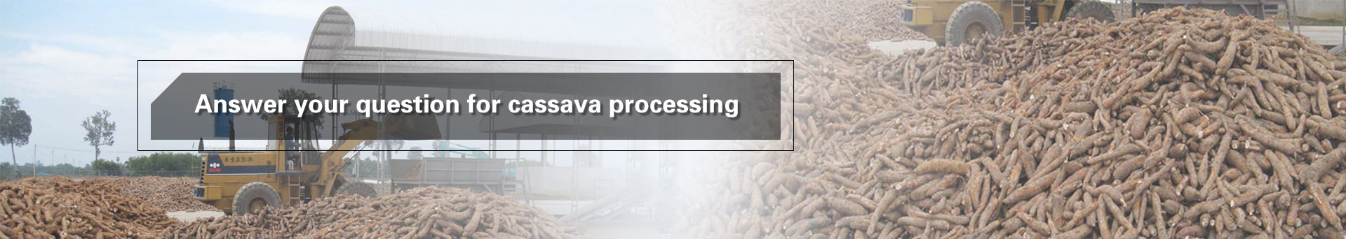 Cassava production and processing
