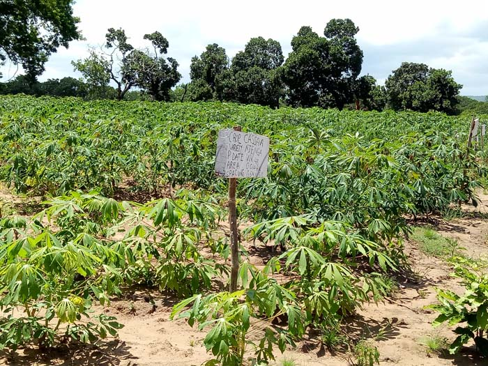 Cassava starch processing in Nigeria - its current status and development situation