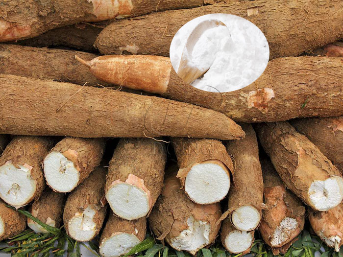 How to produce cassava starch from cassava?