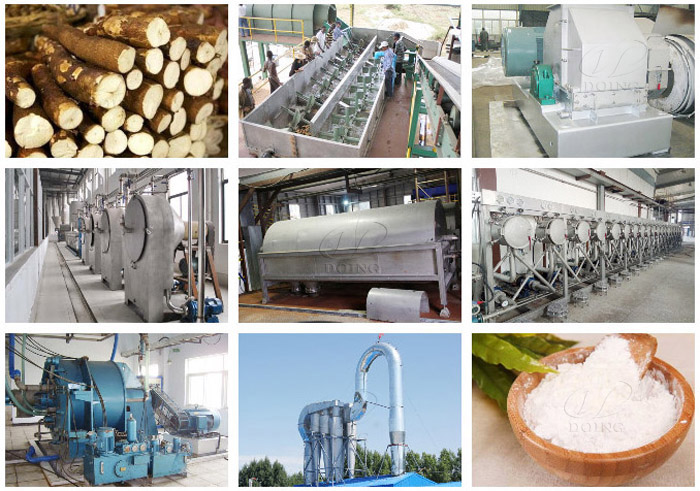 What can cassava be processed into?_Blog