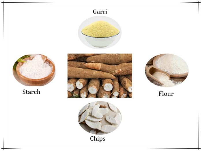 What can cassava be processed into?