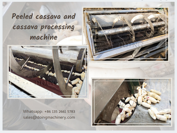 The working principle of cassava peeling machine and working video